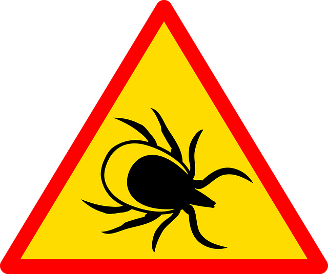 V Česku se loni 774 lidí nakazilo encefalitidou. Zdroj: Pixabay