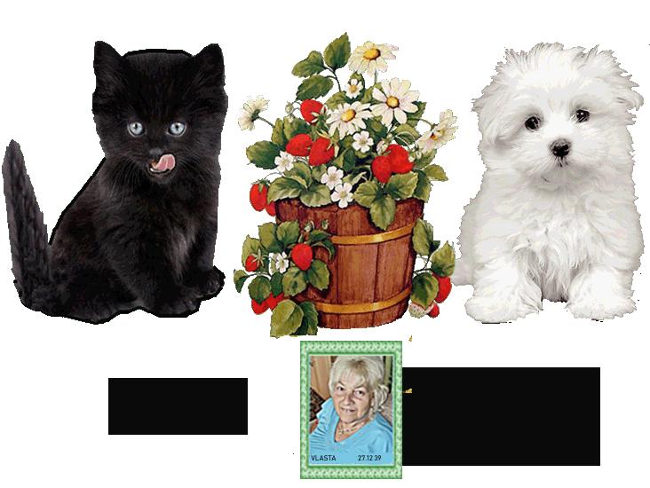 Gästebuch Banner - verlinkt mit http://777vlak.mypage.cz/